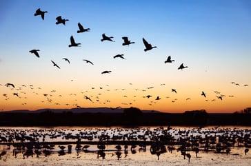 bird photogprahy sunset