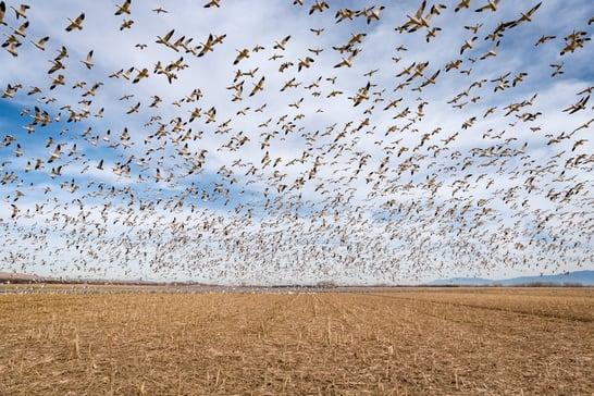 egret bird photography