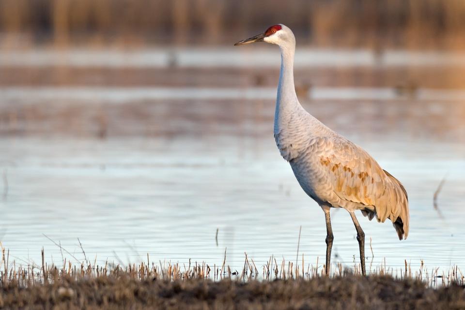 bird migration photography