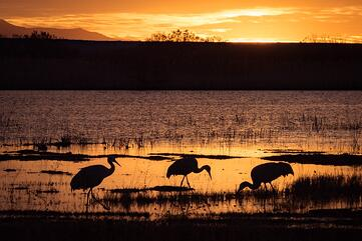 bird photography sunrise