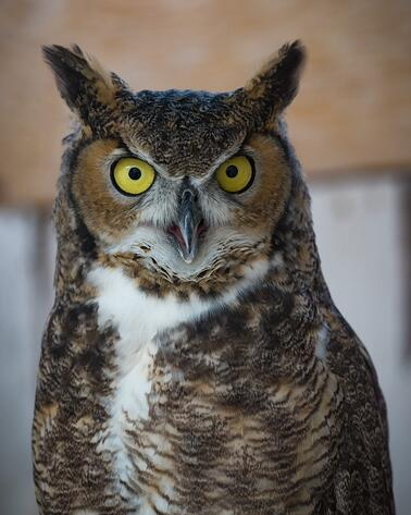 mike ince owl photography