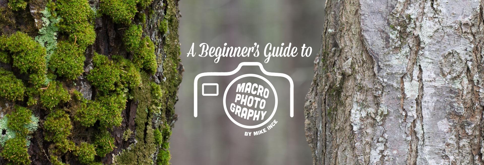 MacroBlog_Header_1.jpg