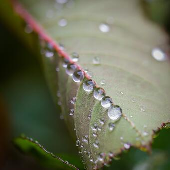 cg-macro-dew-drops2.jpg