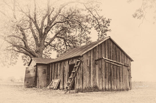 Barn-with-Ladder-and-Live-Oak-Sepia.jpg