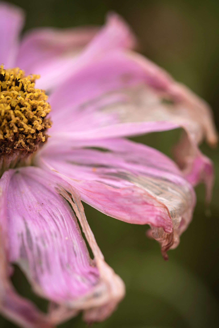 arizona-wildflower-photography-4
