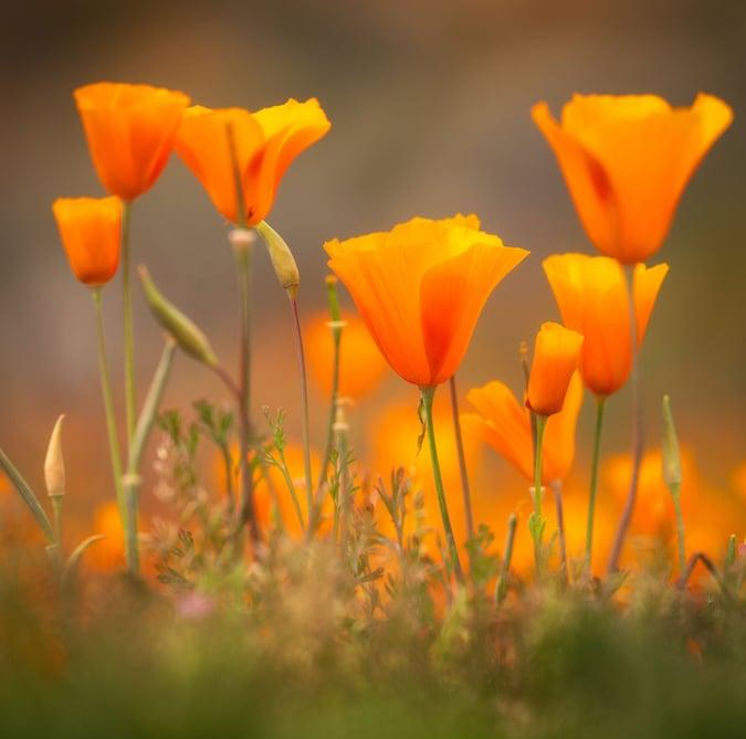 arizona-wildflower-photography-macro-5
